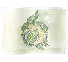 Delicious Cauliflower - Botanical Poster