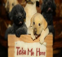 TAKE ME HOME...NO PROBLEM by Sherri     Nicholas