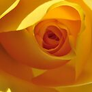 The Yellow Bud by ColinKemp