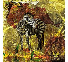 African Wildlife Lion and Zebra Photographic Print