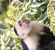 White Face Monkey by Carol Bock