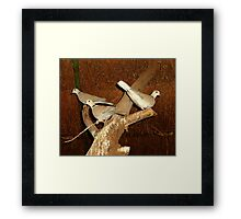 A ring around your neck? Framed Print