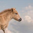 Foal by Henri Ton