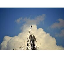 nature complimenting nature Photographic Print