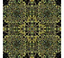 Organic Symmetry, Crown of Leaves Photographic Print