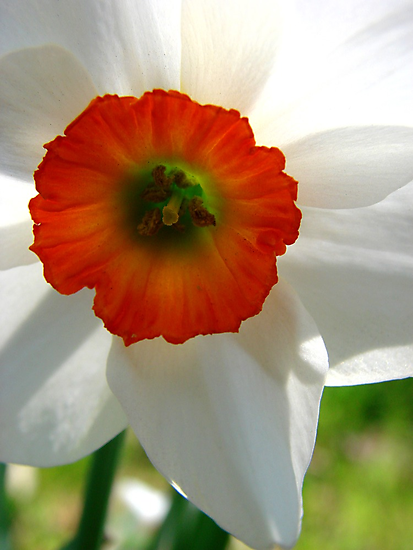 Springtime Macros II by Tricia Stucenski