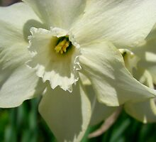 Springtime Macros III by Tricia Stucenski