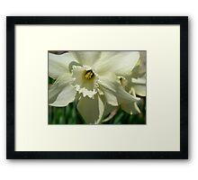 Springtime Macros III Framed Print