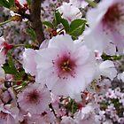 Springtime Macros IV by Tricia Stucenski