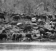 Lurking danger by Explorations Africa Dan MacKenzie