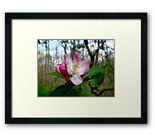 Springtime Macros VII Framed Print