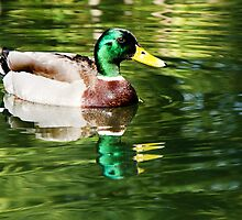 Swimming In The Green :) by Susie Peek