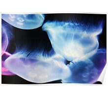 Moon Jellyfish Poster