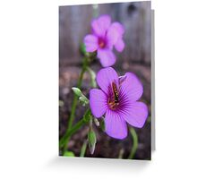 Beautiful Bee on Oxalis Flower Greeting Card