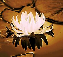 *Gilded Lily* by DeeZ (D L Honeycutt)