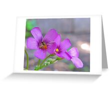 Rainbow Wings - Bee on Oxalis Flower Greeting Card