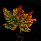 Liquid Leaf by suzannem73