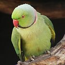 Indian Ringneck / Rose-Ringed Parakeet by Esther&#x27;s Art and Photography