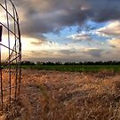 Texas Cornfield by aprilann