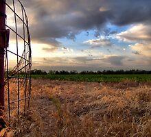 Texas Cornfield by aprilann