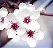 Art of Spring by Milena Ilieva