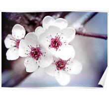 Art of Spring Poster