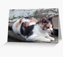 Beth's Cat Greeting Card