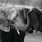 Picking up our scent by Explorations Africa Dan MacKenzie