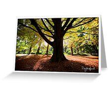 Wombat Hill Botanical Gardens, Daylesford Greeting Card