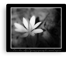 Silly Spring Canvas Print
