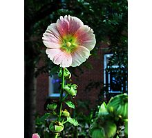 Pale Flower Photographic Print