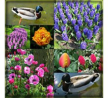 Flowers and Feathers - Keukenhof Collage Photographic Print
