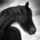 Horse (1-5602) by Raymond Kerr