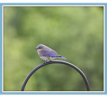 A Little Fluff Of Blue! Photographic Print