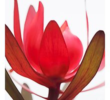 Petals Photographic Print