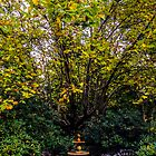 Water fountain in an autumn coloured garden by Luke Kliman