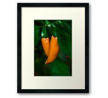 From My Garden - Hot Carrot Chilies Framed Print