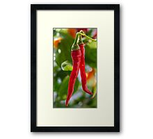 From My Garden - Paprika Framed Print