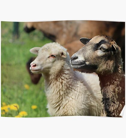 Spring Meadow & Sheep Poster