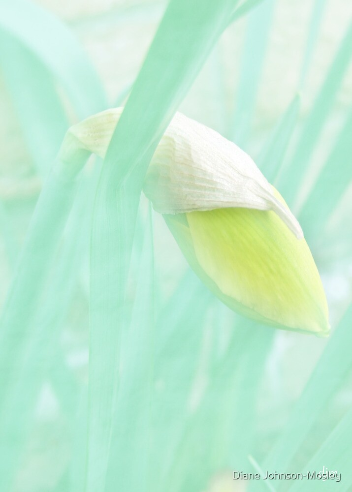 Daffodil Bulb by Diane Johnson-Mosley