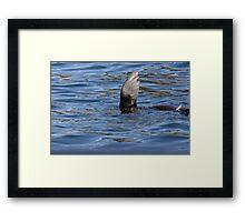 Seal Waving Framed Print