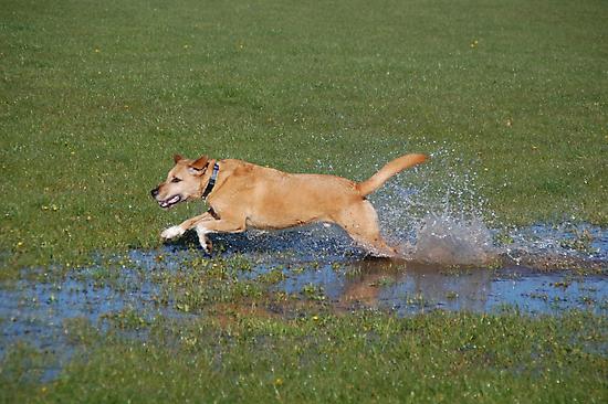 Makin' a big splash.. by The-Stranger
