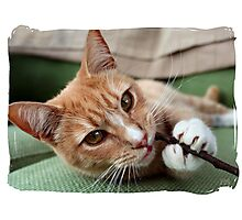 Mum don't mind me chewing this! Photographic Print