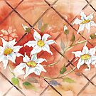 Clematis - Queen of the flowering vines by Maree Clarkson
