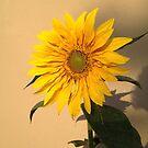 Sunflower in Garden by Anita Deppe
