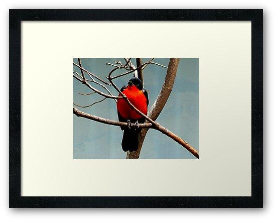 Bird in tree by Chris  Hayworth