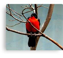 Bird in tree Canvas Print