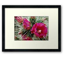 Barcelona cactus garden Framed Print