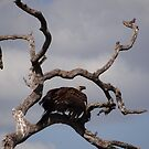 Vulture in dead tree by Anita Deppe