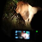 Male Lion at night by Anita Deppe